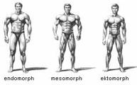 morphotypes