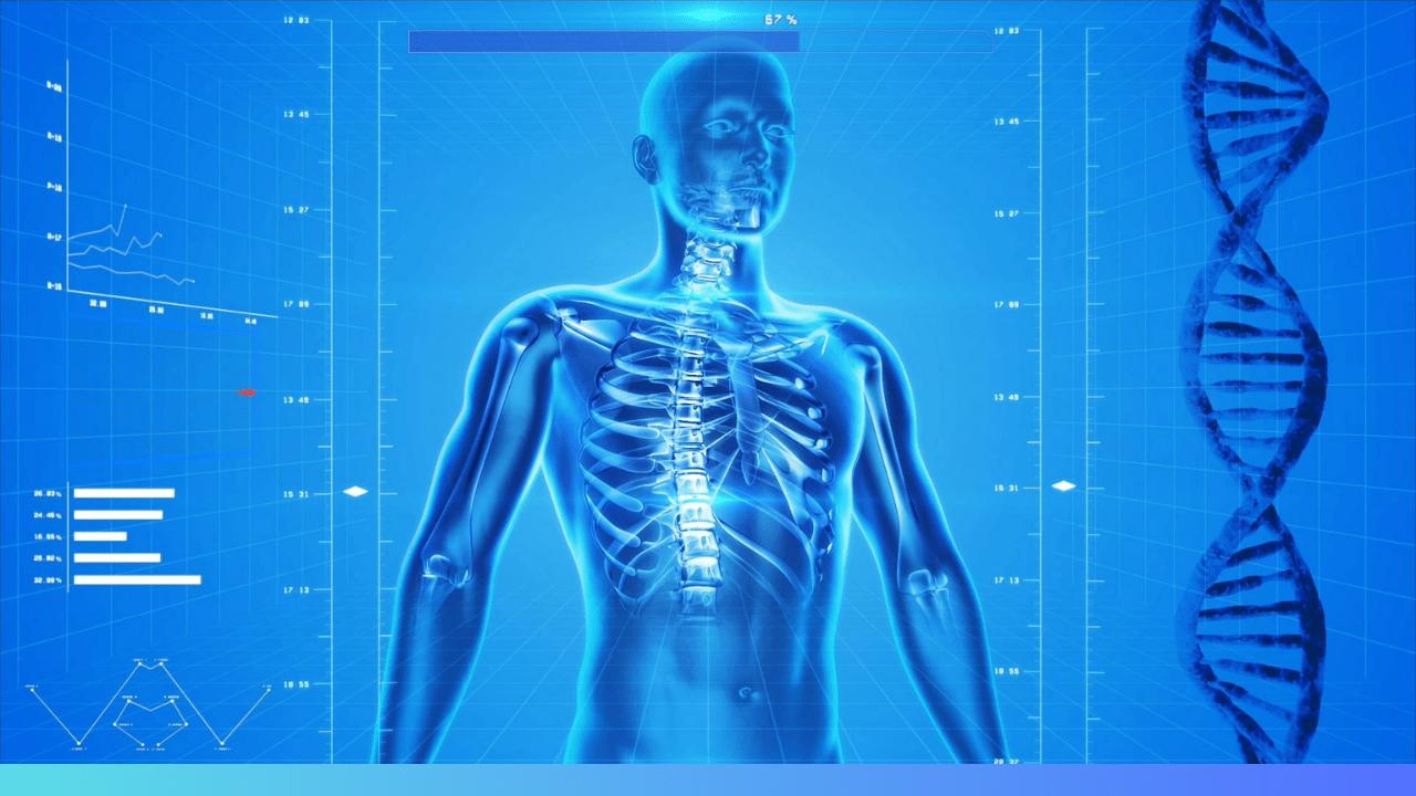 anatomie morphologie